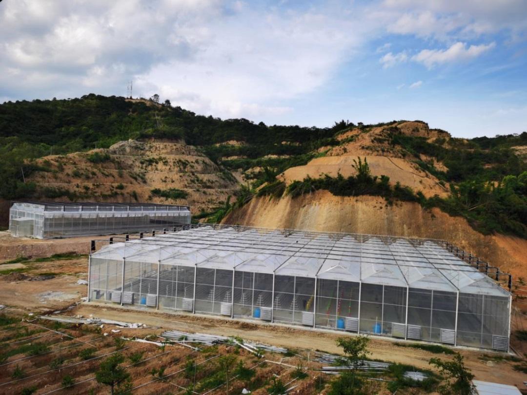 联塑潮州佛手果现代农业产业园